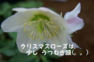 f0203094_139512.jpg