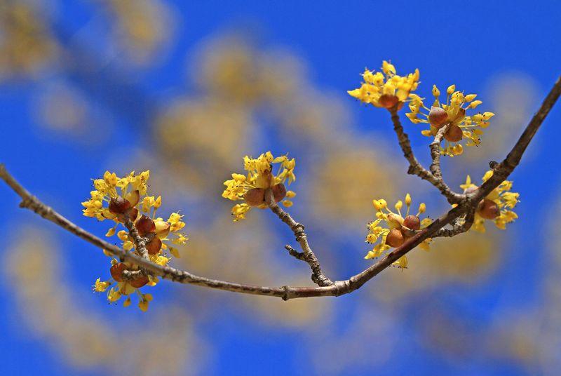 黄いろな花コ_c0104227_13215415.jpg