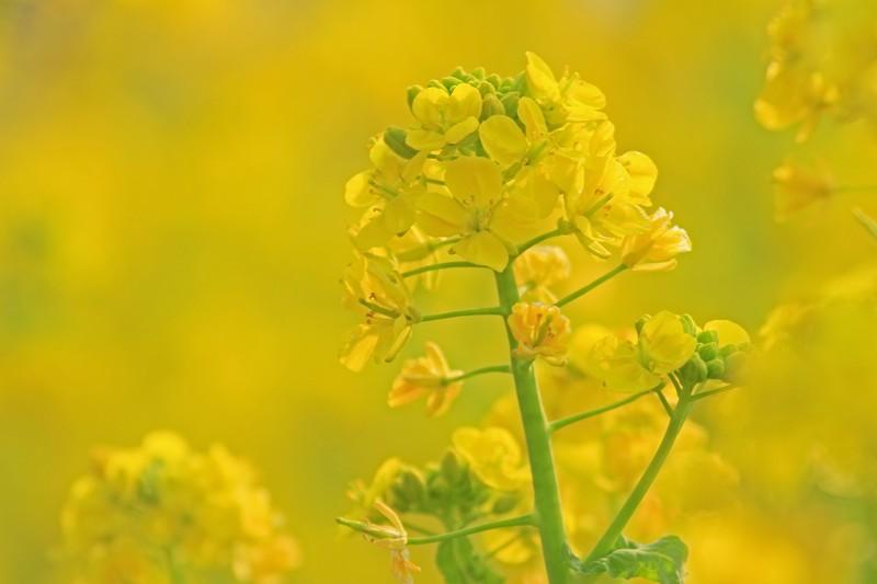 黄いろな花コ_c0104227_13501790.jpg