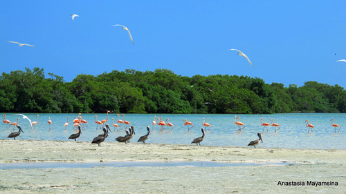 Mexico - in pursuit of flamingos_e0169998_15255015.jpg