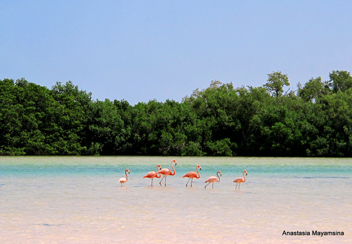 Mexico - in pursuit of flamingos_e0169998_1526187.jpg