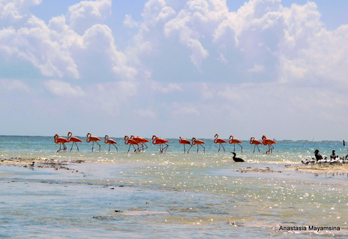 Mexico - in pursuit of flamingos_e0169998_15264765.jpg