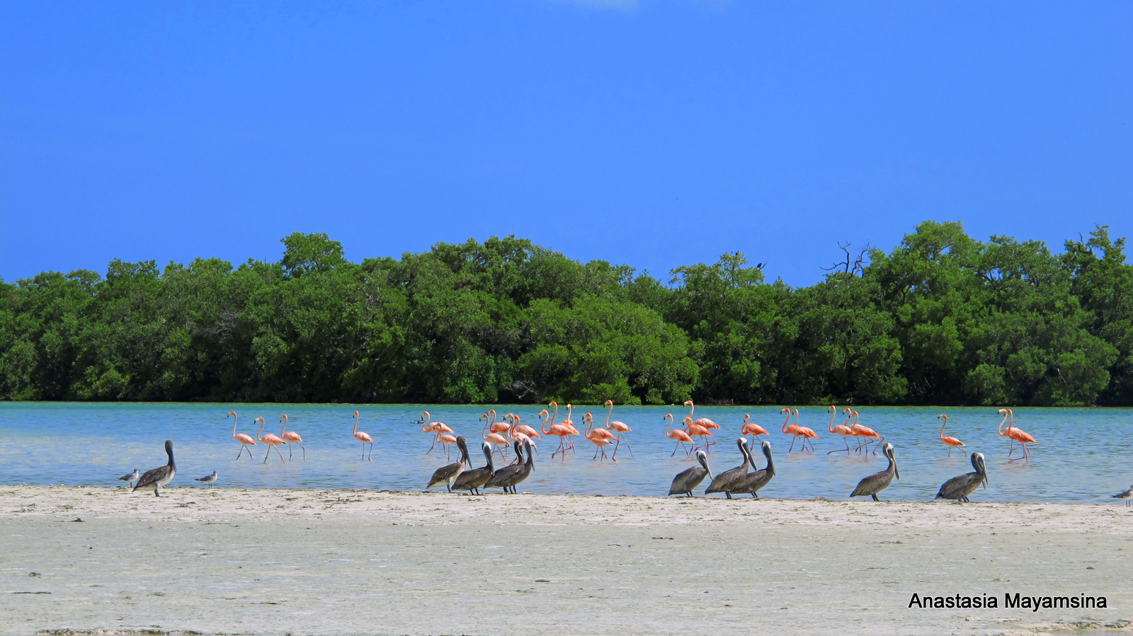 Mexico - in pursuit of flamingos_e0169998_152675.jpg