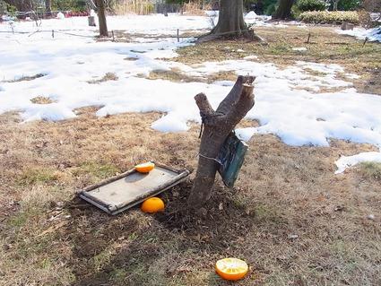 雪で壊れた餌台を直しました_b0049307_18151480.jpg