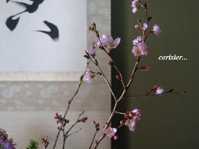優しく包みこむ セラピーの桜・・・☆_c0098807_21363145.jpg