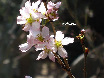 優しく包みこむ セラピーの桜・・・☆_c0098807_21471142.jpg