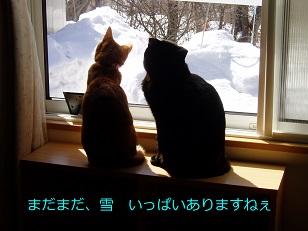 b0200310_729021.jpg