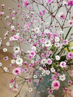 ニコッと春よ来い??_f0239625_152881.jpg