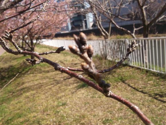 桜いろいろ....メジロも!_b0137932_13135397.jpg
