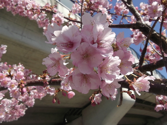 桜いろいろ....メジロも!_b0137932_1395813.jpg