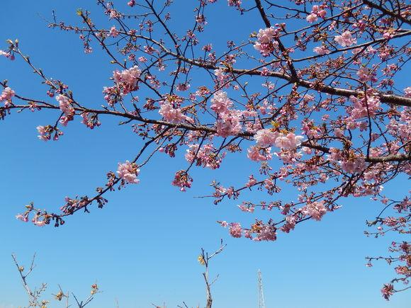 桜いろいろ....メジロも!_b0137932_23184058.jpg