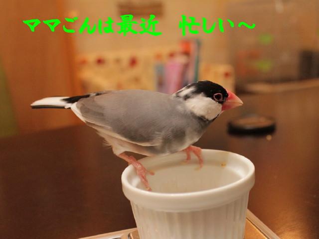 b0158061_2213940.jpg