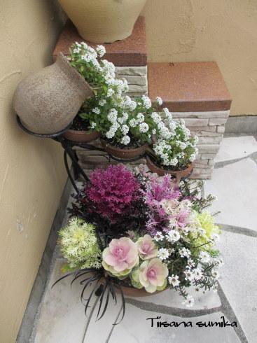寄せ植えのお花が見頃になりました♪_a0243064_18073079.jpg