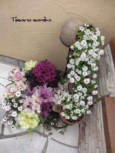 寄せ植えのお花が見頃になりました♪_a0243064_18074542.jpg
