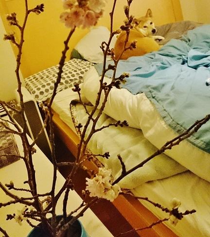 春きてます!_d0087483_2063042.jpg