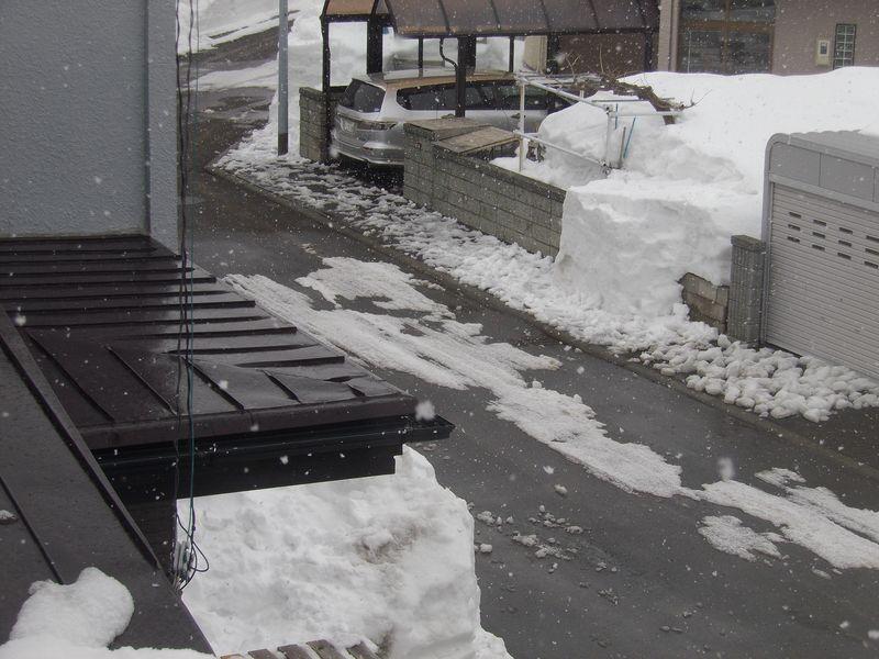 雪解け進むかに思えたものの_c0025115_225729100.jpg
