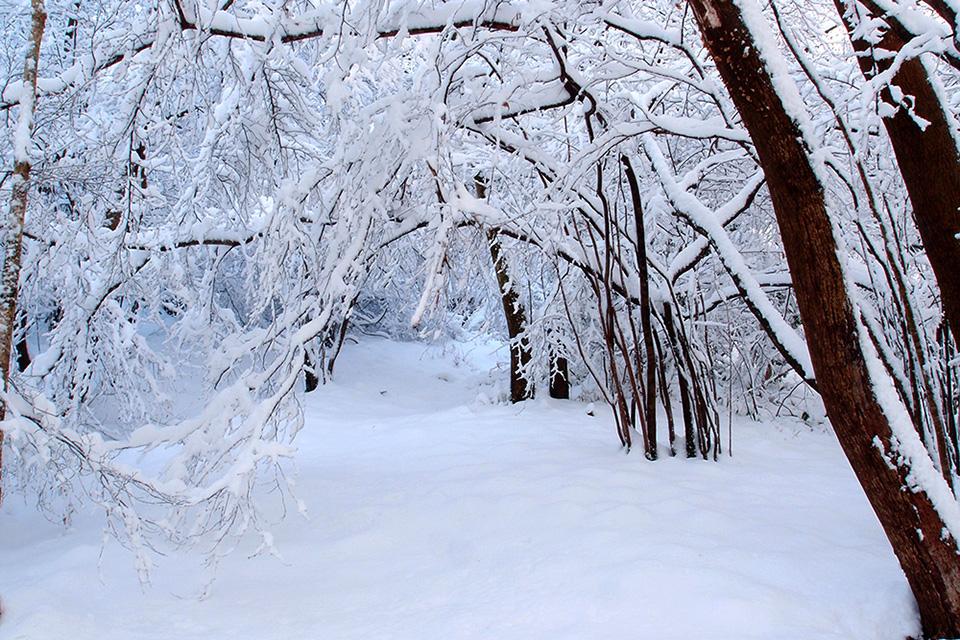 季節はずれのワンダホー!_d0032761_184152.jpg