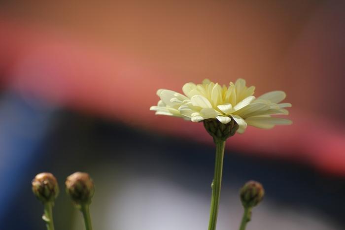 咲くところ_e0207782_17101564.jpg