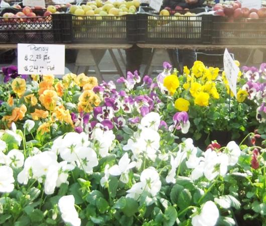 NYユニオン・スクエアの青空市場に春の気配_b0007805_1835966.jpg