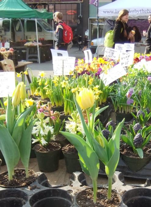 NYユニオン・スクエアの青空市場に春の気配_b0007805_1841015.jpg