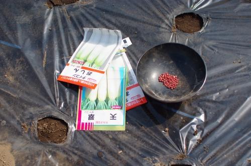 スナップエンドウを植える。_c0110869_649629.jpg