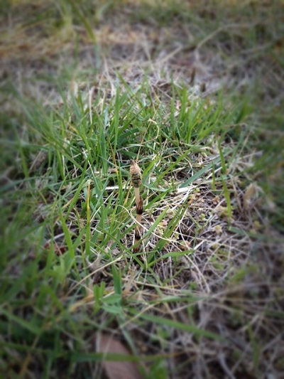 春のかけら_d0091671_1701438.jpg