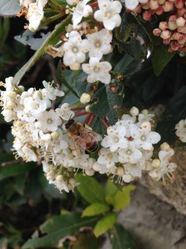 蜂は大忙しです_f0106597_06145656.jpg