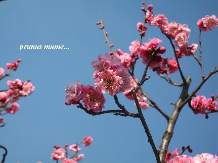 春を開く、梅の花が咲くとき・・・☆_c0098807_20562799.jpg