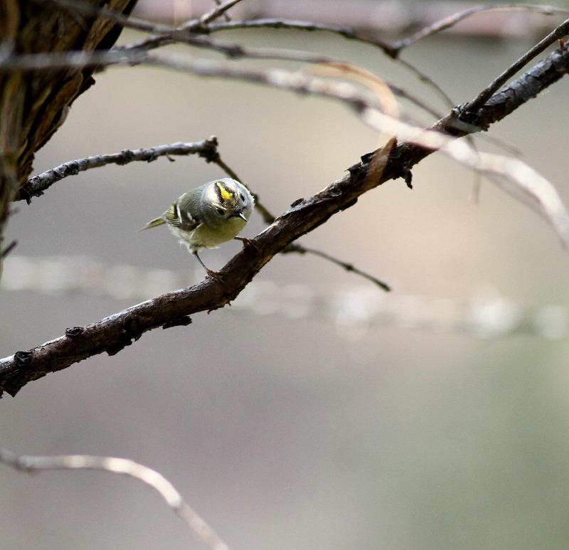 よく見えたキクちゃんの黄色いのが・・・_c0213607_2341776.jpg