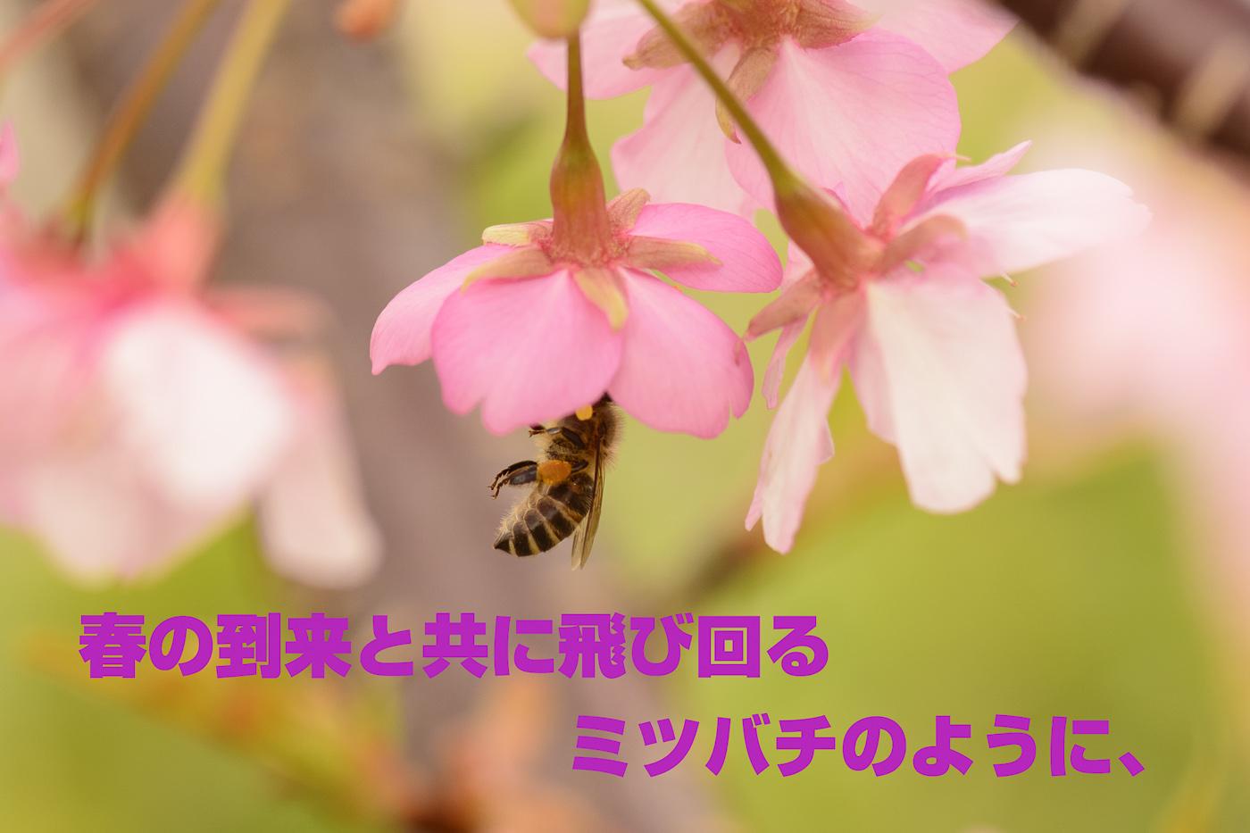 e0308416_23271482.jpg