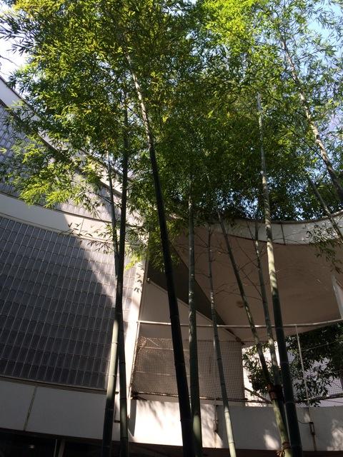 羽根木の森 お料理教室_e0141819_11335051.jpg