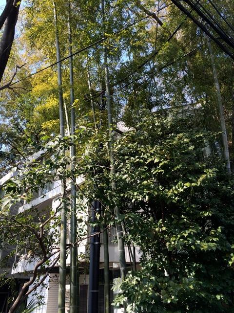 羽根木の森 お料理教室_e0141819_11352586.jpg