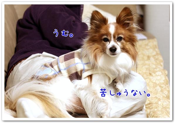 d0013149_059465.jpg