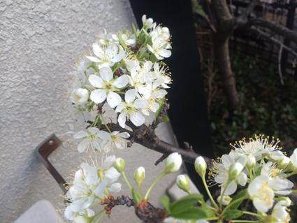 春_e0147757_01001247.jpg