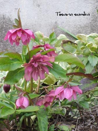 お花を買ってきました♪_a0243064_15214025.jpg