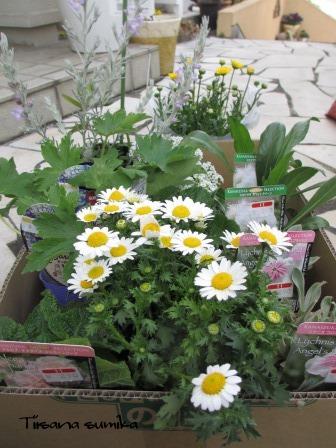 お花を買ってきました♪_a0243064_15222351.jpg