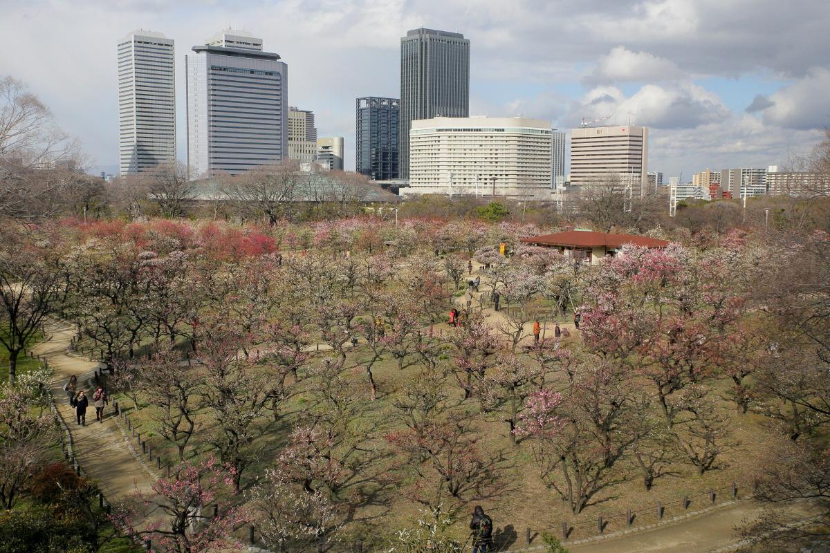 大阪城梅園 2014                  _f0021869_23514249.jpg