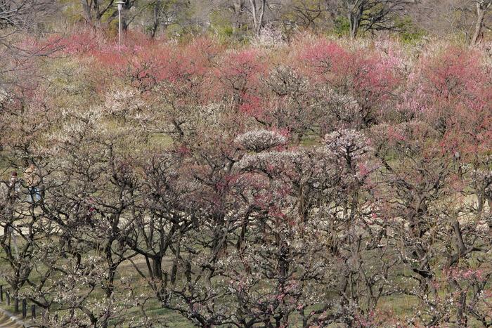 大阪城梅園 2014                  _f0021869_23523031.jpg