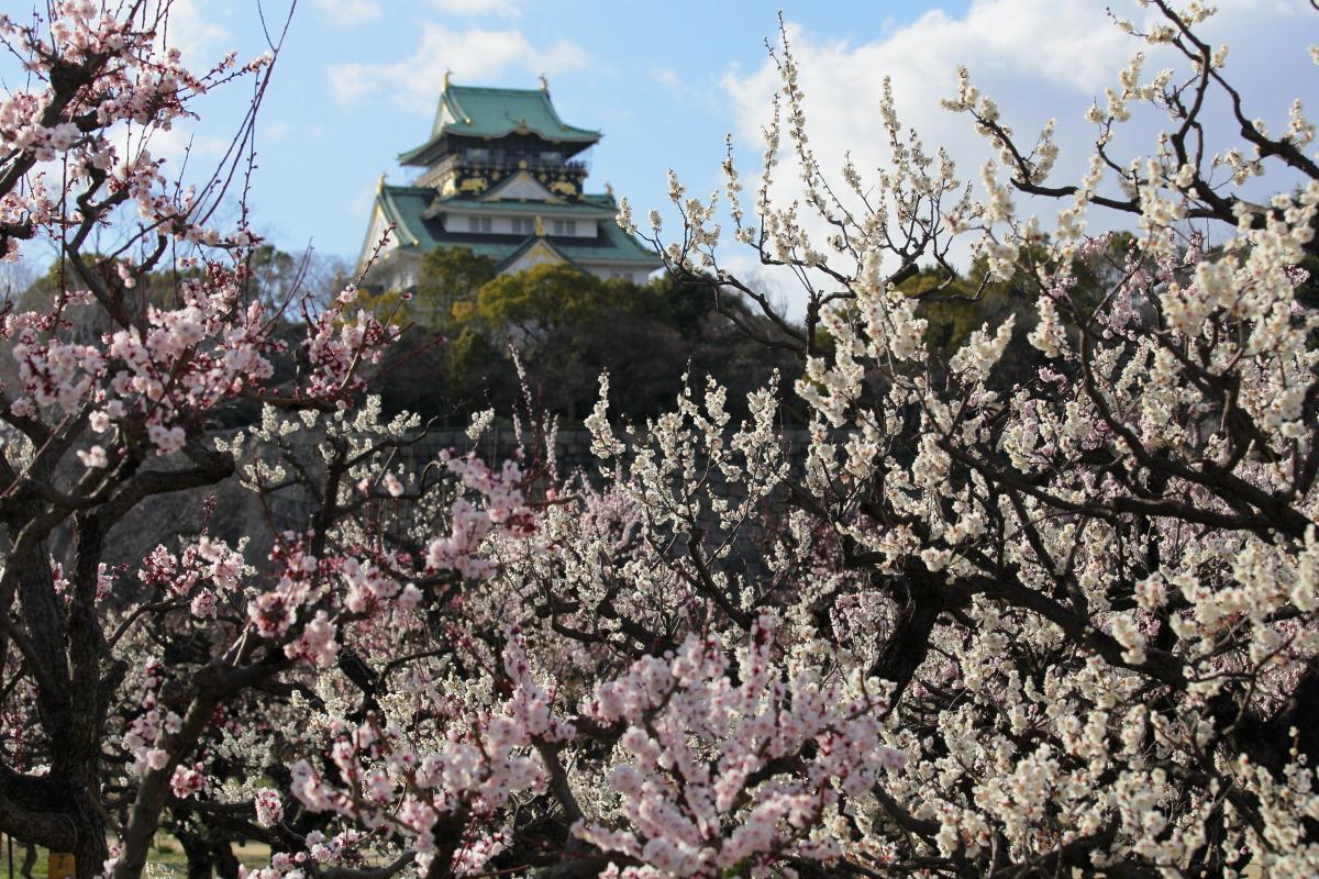 大阪城梅園 2014                  _f0021869_23524557.jpg