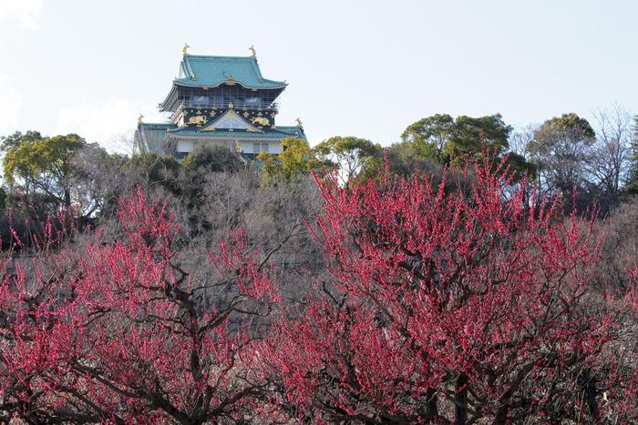 大阪城梅園 2014                  _f0021869_23525734.jpg