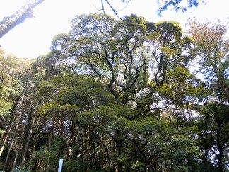 早春の里山ツアー(1) ~クヌギ林からツブラジイの森へ~_b0102572_10463337.jpg