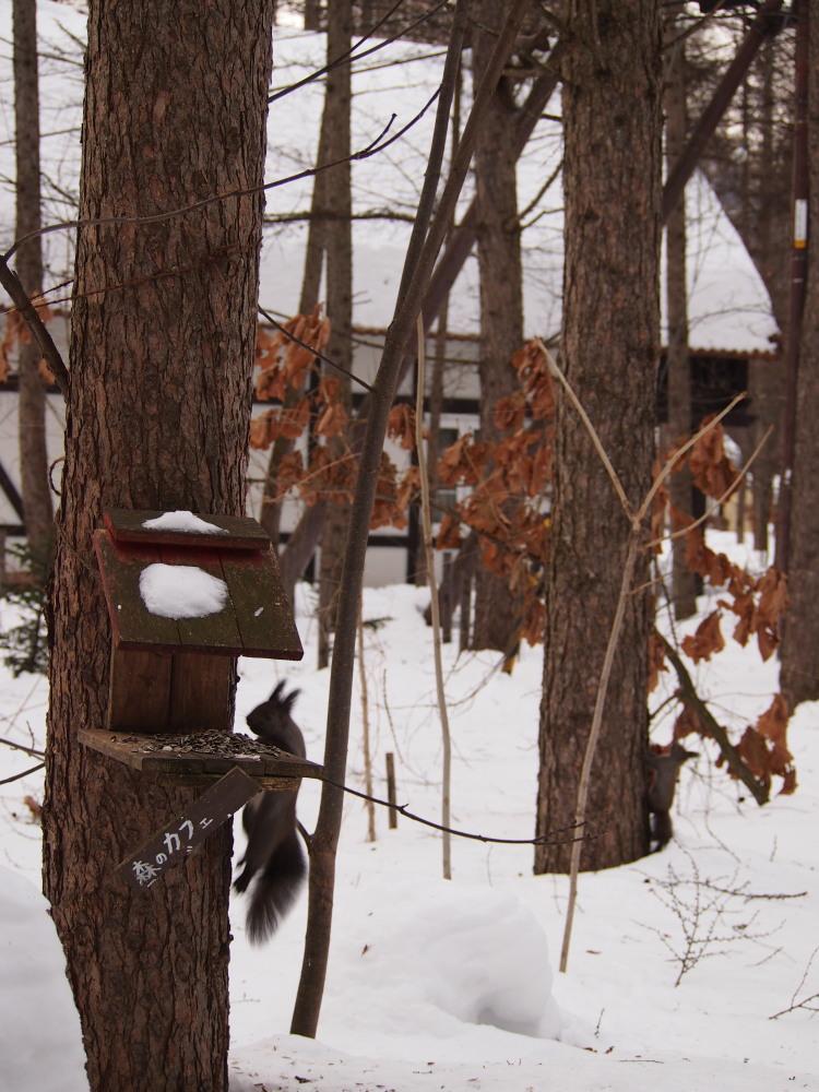 """カンタベリーの森の中で‥3匹の""""エゾリス君""""をさがして!_f0276498_16324306.jpg"""