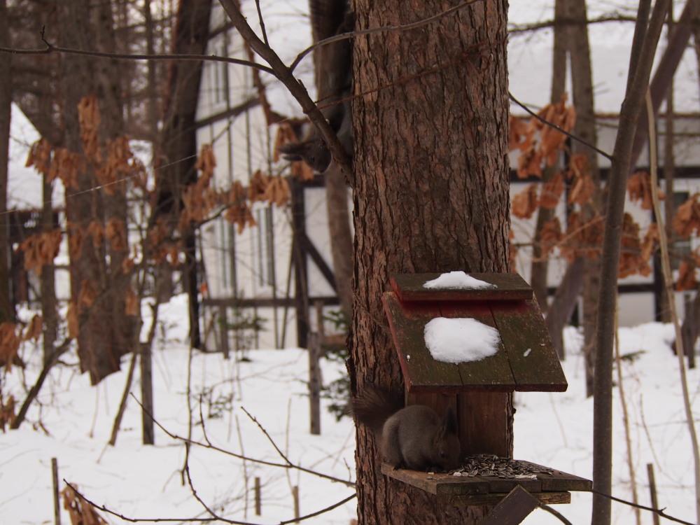 """カンタベリーの森の中で‥3匹の""""エゾリス君""""をさがして!_f0276498_16332809.jpg"""