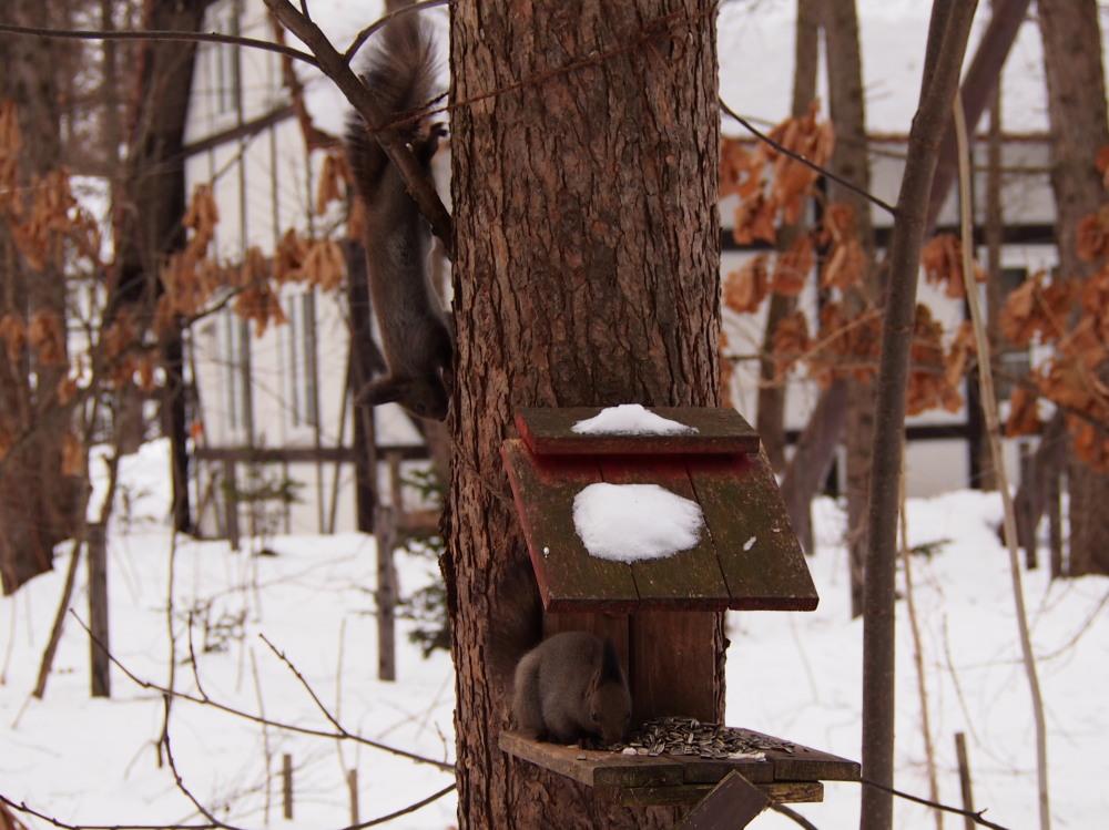 """カンタベリーの森の中で‥3匹の""""エゾリス君""""をさがして!_f0276498_16334169.jpg"""