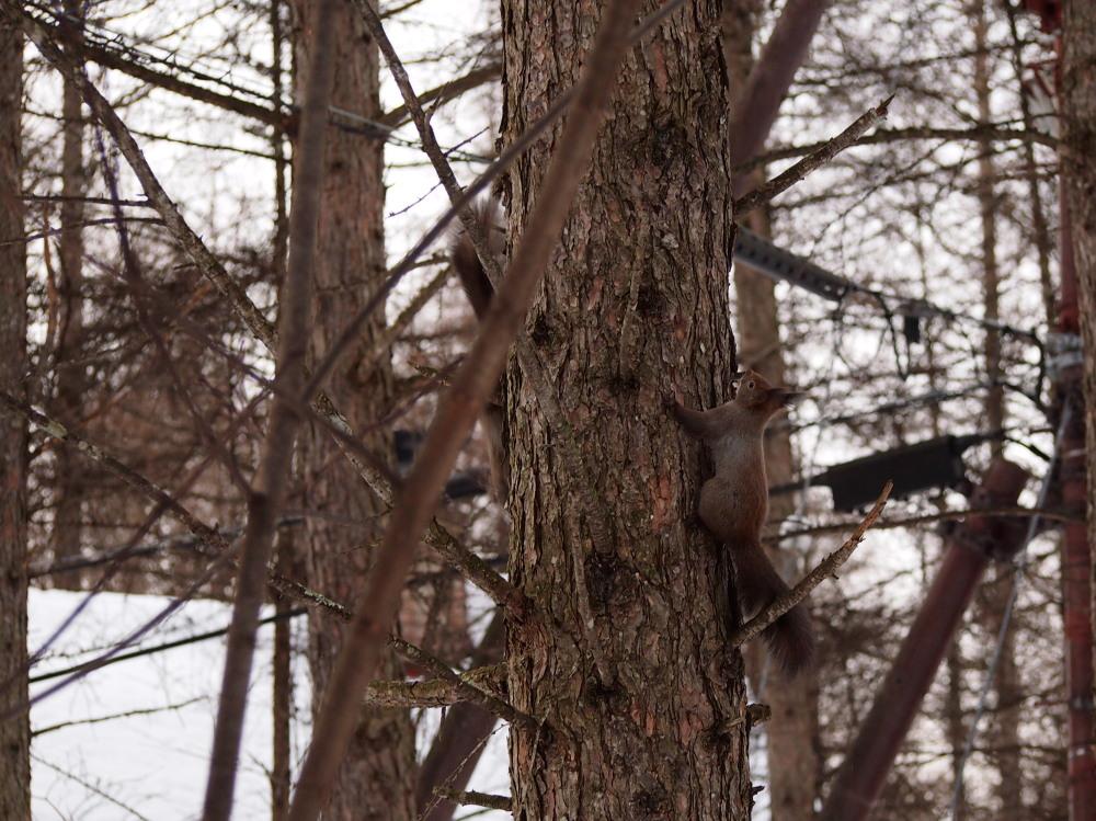 """カンタベリーの森の中で‥3匹の""""エゾリス君""""をさがして!_f0276498_16343813.jpg"""