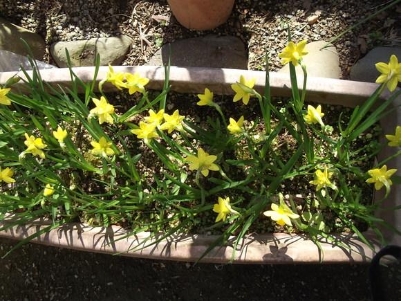 花が咲く春です..._b0137932_21313319.jpg