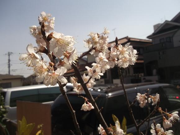 花が咲く春です..._b0137932_21314653.jpg