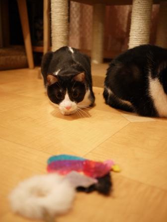 第12回ゆきねこ教室いろいろ猫家族vol.2 本日開催。_a0143140_2382882.jpg