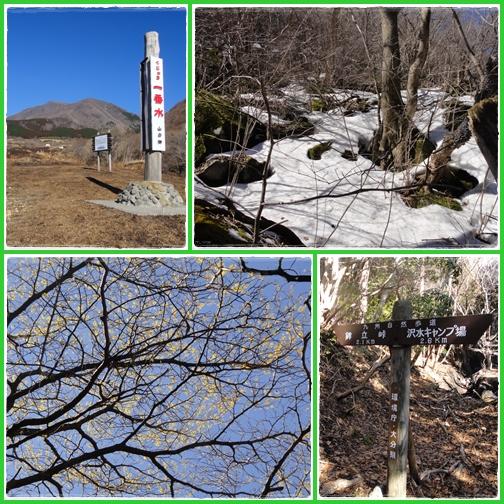 佐渡窪へマンサク詣で_e0164643_22593710.jpg