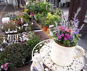 西尾市「憩の農園」植木市_c0141652_12502783.jpg